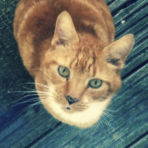 Pumpkin, recently put-to-sleep at home by veterinary surgeon Nigel Bradfield. Pet euthanasia by Time2SayGoodbye.